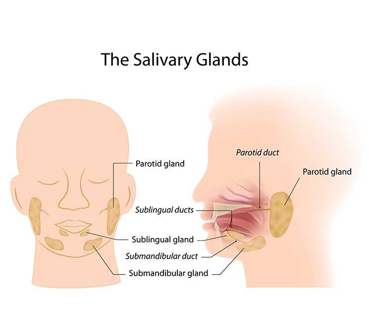 Salivary Glands facial swelling