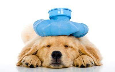 Migraine Treatment and Management